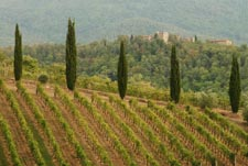 Stita customised farm tours to Tuscany